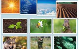 Экологический квн для педагогов «знатоки природы».