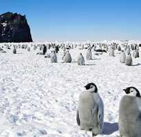 Кто был на южном полюсе. Южный полюс