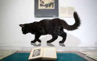 Кот бегемот в образе человека. День музеев