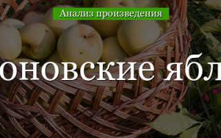 Образы в рассказе антоновские яблоки. Рассказа И