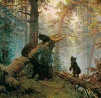 Шишкин лес художник. Иван иванович шишкин