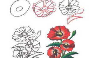 Учим ребенка рисовать цветы. Как рисовать цветы