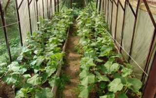 От чего зависит урожайность огурцов в теплице.