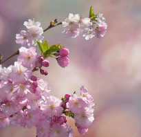 В пьесе вишневый сад. Раневская — Лопахин