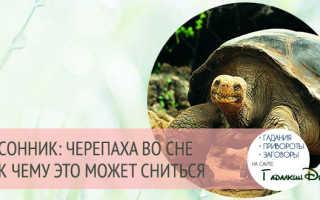 К чему снится черепаха женщине.
