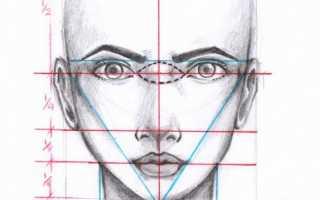 Лицо анфас. Основы рисования портрета