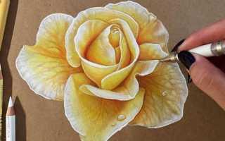 Как рисовать цветы поэтапно легко. Рисуем цветы