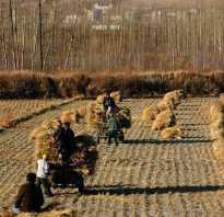 Аграрное общество (признаки и разрушение).