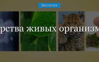 4 царства в биологии. Царства живых организмов
