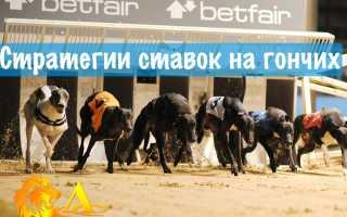 Собачьи бега как выиграть. Бега и преследование